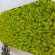 Design vegetal, design natural, licheni stabilizati, elemente organice proiect Green Mood, Clinica Elos, design de clinică, design de produs, amenajare clinica de infrumusetare,clinică, management de proiect, design interior, echipamente specializate, spatiu de business, solutii inovative pentru business, amenajare interioara, solutii personalizate, accesorii, mobilier, consultanta design interior